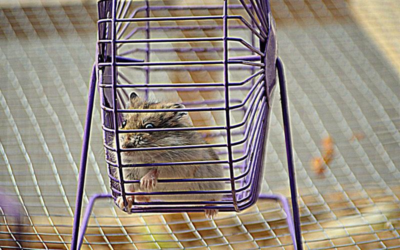 cage_hamster_meilleur_comparatif_test_avis_3