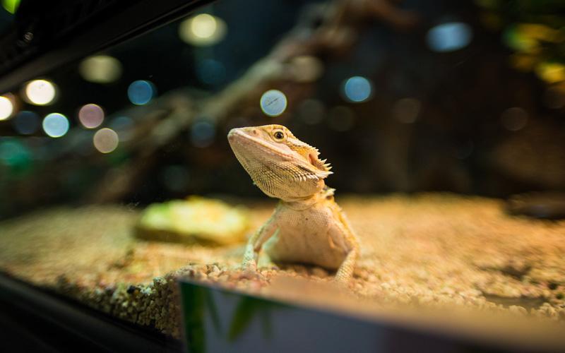 chauffage_reptile_meilleur_comparatif_test_avis_1