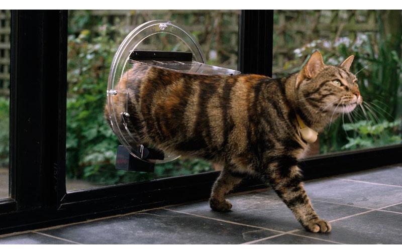 chatière-électronique-comparatif-test